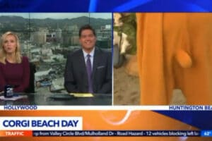 local news corgi costume KTLA reporter Mark Mester beach day