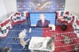 Stephen Colbert kitten vp focus group