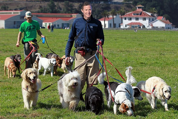 billy bush dog walk