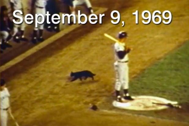 Chicago Cubs Black Cat