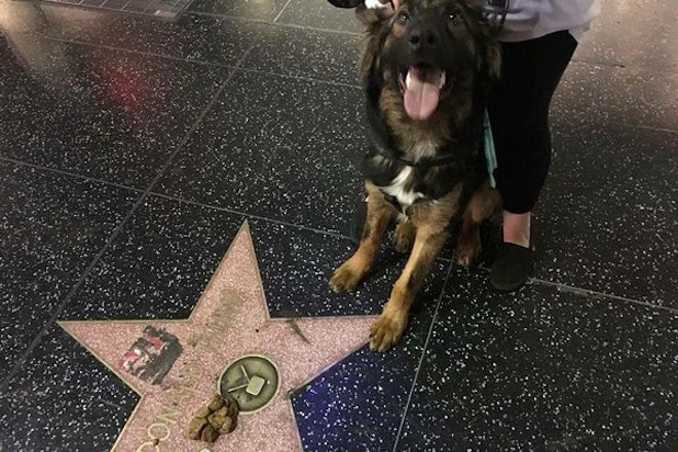 trump star dog