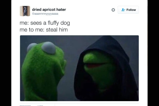 kermit the frog meme