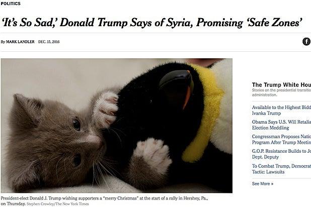 make-america-kitten-again