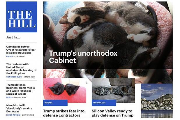trumps-kitten-cabinet