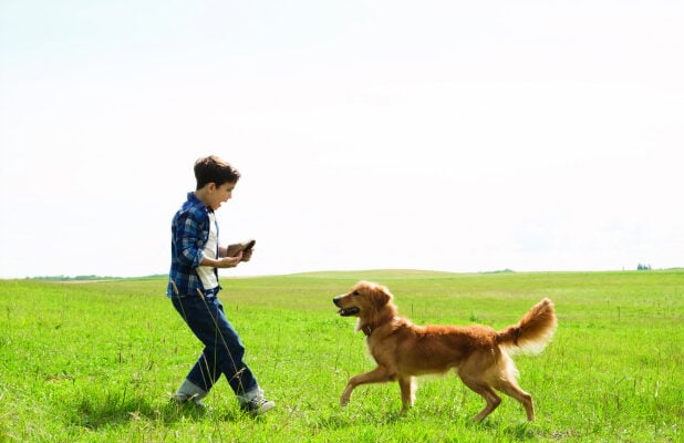 a dogs purpose full movie free download hd