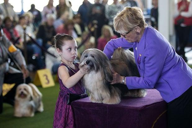 Havanese Westminster Dog Show
