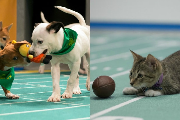 Puppy Bowl/Kitten Bowl