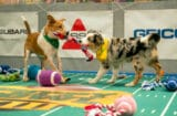 Teams Ruff and Fluff take to the field during Puppy Bowl XIII.