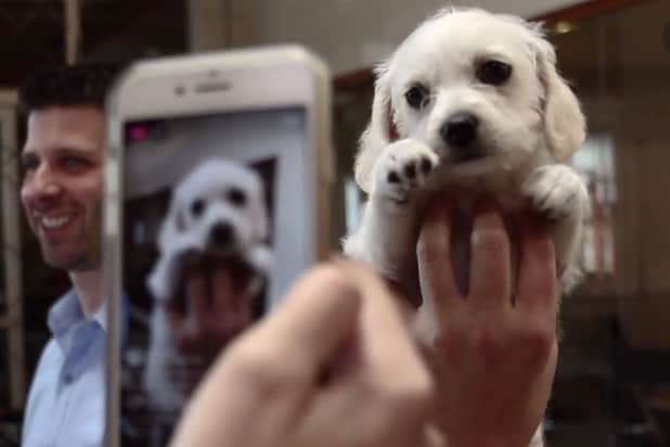 Animal Planet's Puppy Bowl Expert Shares the History of All That Cuteness (Exclusive Video)