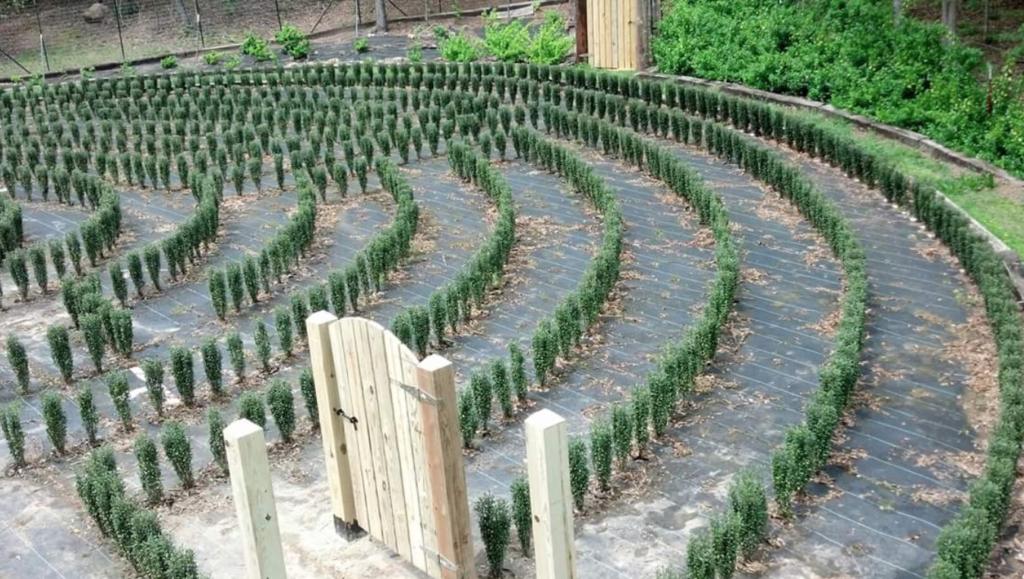 s-town maze 3