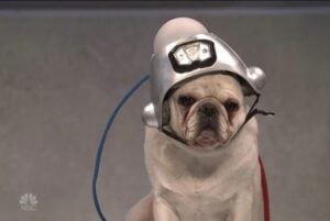 snl trump dog