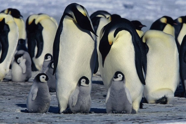 march of the penguins morgan freeman