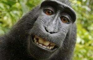 naruto monkey selfie peta planet of the apes