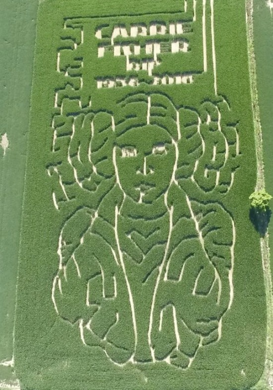 Carrie Fisher Corn Maze