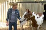 Conan O'Brien Horse
