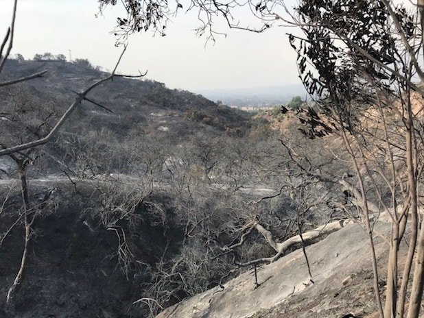 ojai fire burned mountain