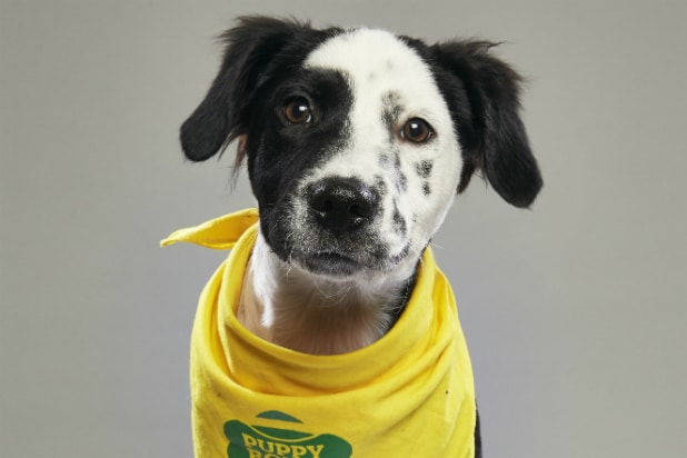 Bear, 'Puppy Bowl VIX'