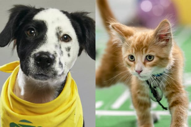 Watch 11 adorable puppies determine who will win Super Bowl LII