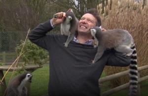 BBC Reporter Lemurs
