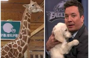 April the Giraffe and Jimmy Fallon