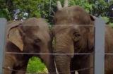 'The Zoo' - Animal Planet