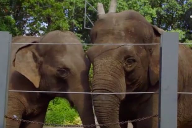The Zoo It S Grooming Time For The Elephants Exclusive Video