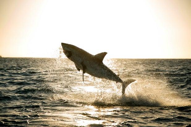 Nat Geo Wild Just Made 'SharkFest' Twice as Long as 'Shark Week'