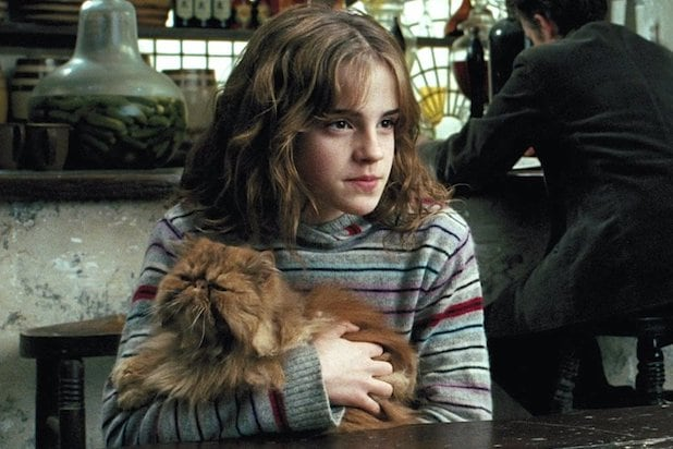 Cat who played Crookshanks and rat trained like those who ...  |Harry Potter Hermione And Crookshanks