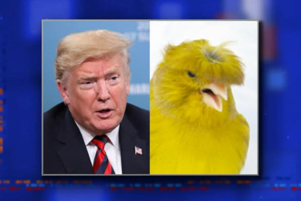 the late show with stephen colbert donald trump looks like a canary
