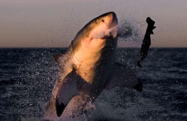 092a02746cb Shark Week' 2019 Includes First Original Film with Josh Duhamel
