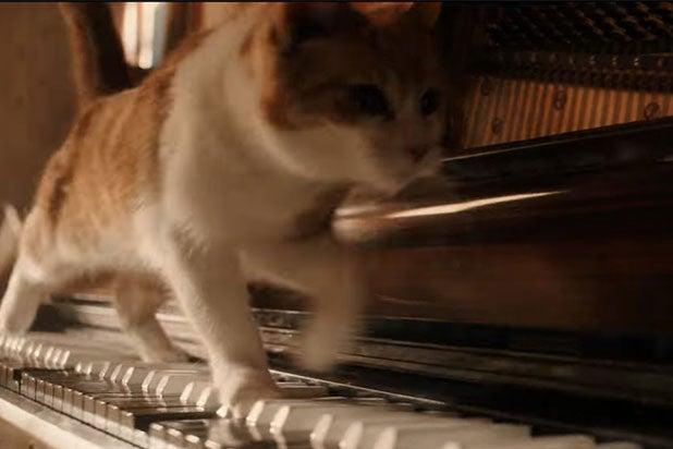 Cats Bohemian Rhapsody