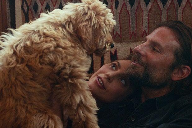 Bradley Cooper's Dog Helps Win Him Win PETA's 'Oscat' Award