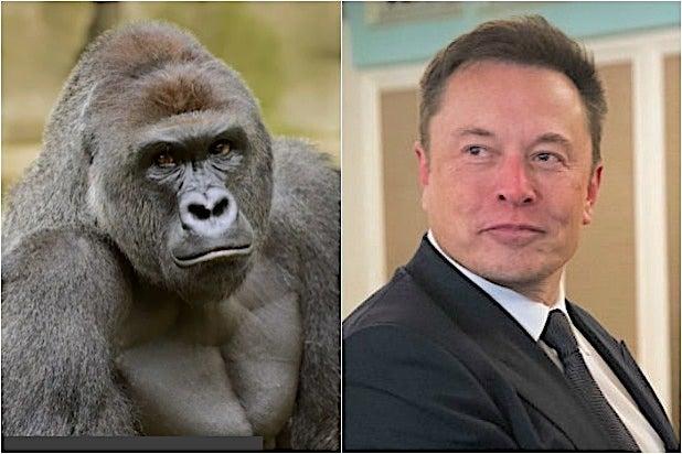 Elon Musk Harambe Gorilla Cincinnati Zoo