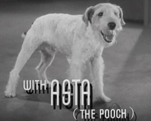 Asta After the Thin Man