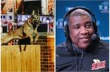 curt menefee america's top dog