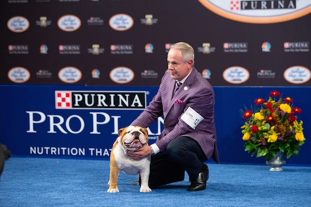 Beverly Hills Dog Show 2020.Thor The Bulldog And 6 Other Very Good Boys And Girls From