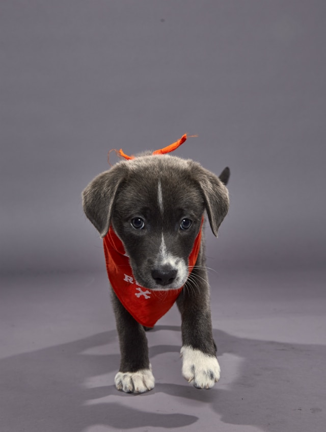 Gina - Puppy Bowl XVI