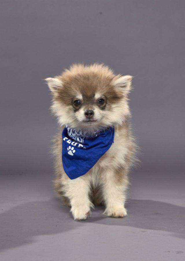 Theodore - Puppy Bowl XVI