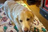Jimmy Fallon's dog Gary