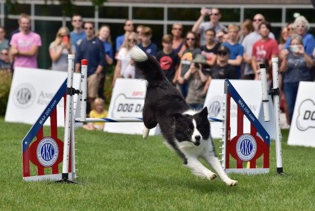 ESPN dogs American Kennel Club