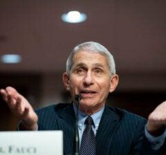 Anthony Fauci testifies before the Senate
