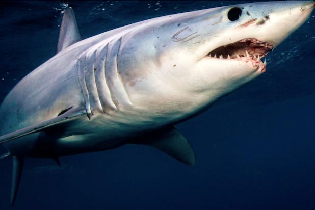 shark week 2020 - photo #1