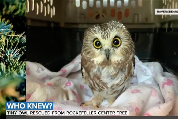 Owl Rockefeller Center Christmas Tree