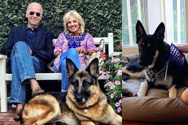 Joe Biden Jill Biden dogs Champ Major