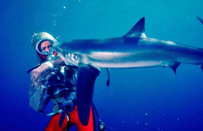 Playing With Sharks Sundance