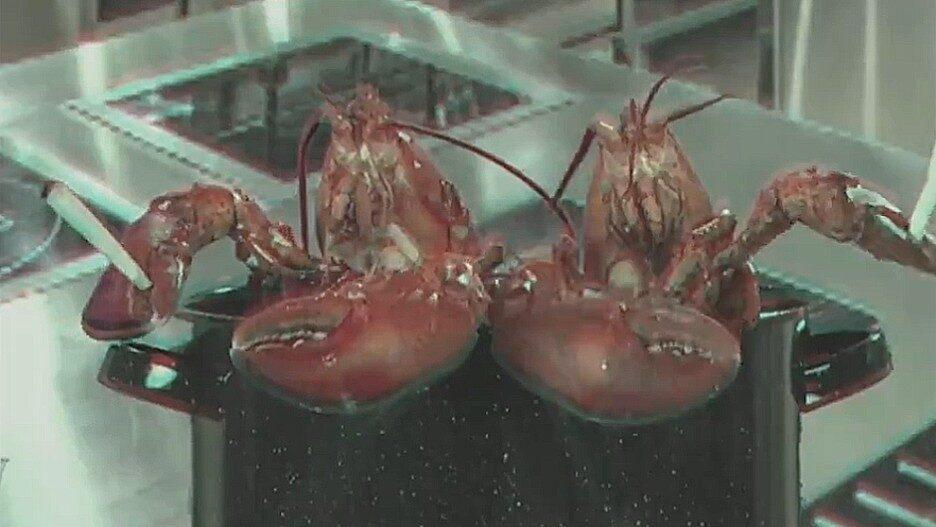 Colbert Stoner Lobsters
