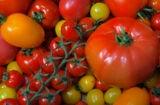 tomatoes WaxWord