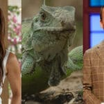 new summer tv show ratings broadcast